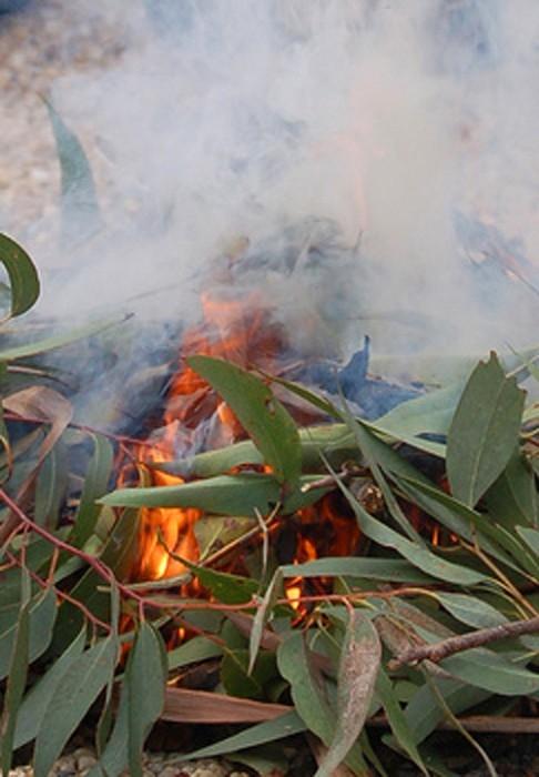 aboriginal campfire australian aboriginal culture use of fire