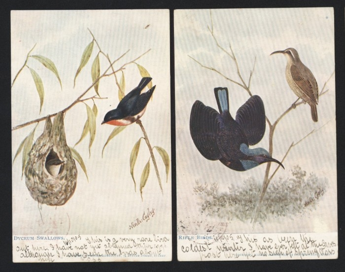 Bird postcards from 1905