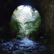 blue mountains bushwalks - visit the amazing glow worm tunnels.